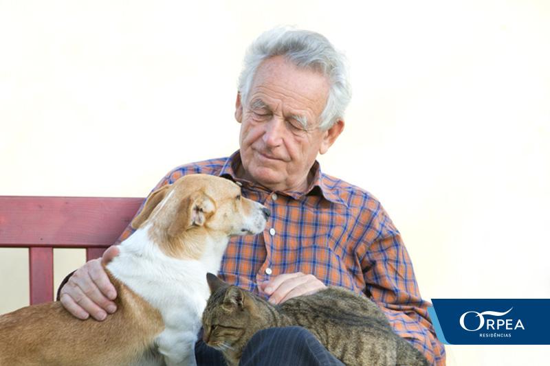 terapia com animais